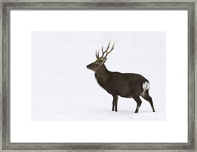 Deer In Snow Framed Print