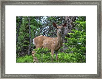 Deer In The Assiniboine Park, Canada Framed Print by Howie Garber