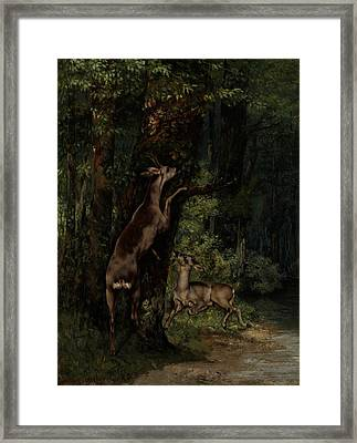 Deer In The Forest Framed Print by Gustave Courbet
