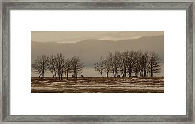 Deer In The Meadows Framed Print