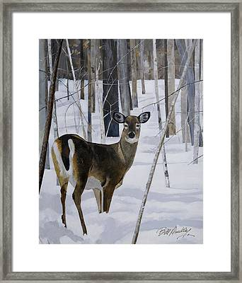 Deer In The Snow Framed Print by Bill Dunkley