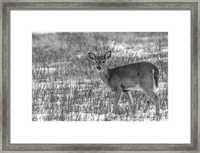 Deer In Winter Framed Print