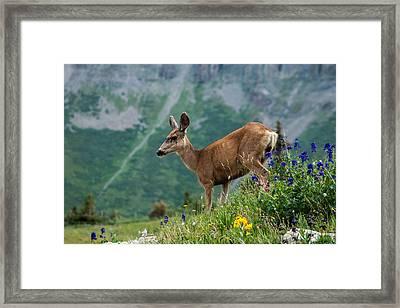 Deer Framed Print by Jay Stockhaus