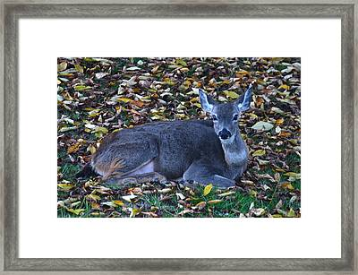Deer Framed Print by Jeri lyn Chevalier