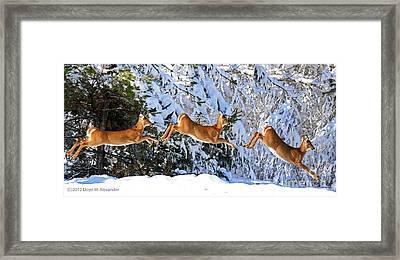 Deer Jump Framed Print