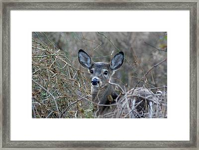 Framed Print featuring the photograph Deer by Karen Silvestri