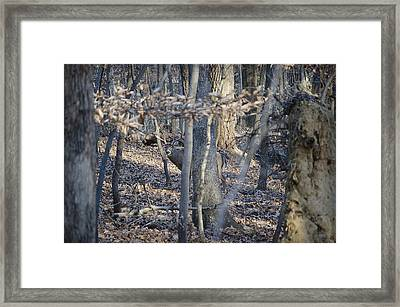 Framed Print featuring the photograph Deer by Michael Donahue