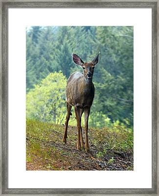 Deer Framed Print