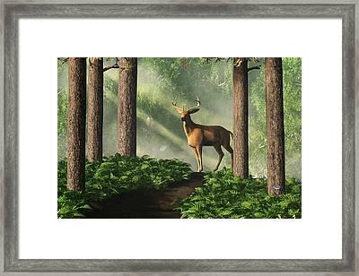 Deer On A Forest Path Framed Print