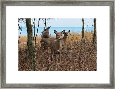 Deer On The Beach Framed Print by Anna-Lee Cappaert