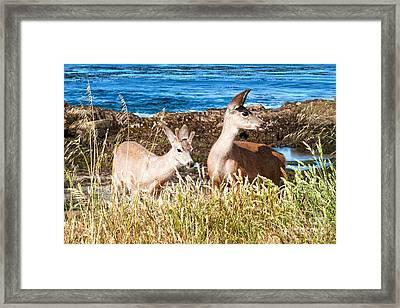Deer On The Beach At Point Lobos Ca Framed Print