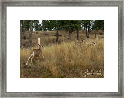 Deer On The Run Framed Print