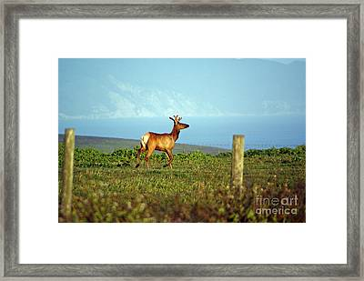 Deer On The Rune Framed Print