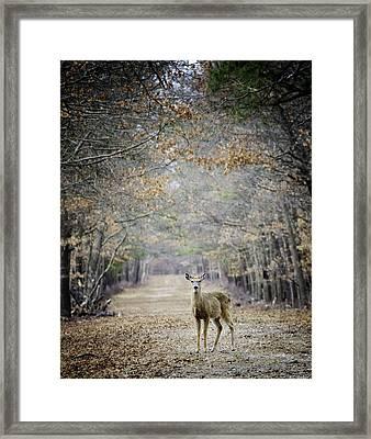 Deer Path Framed Print