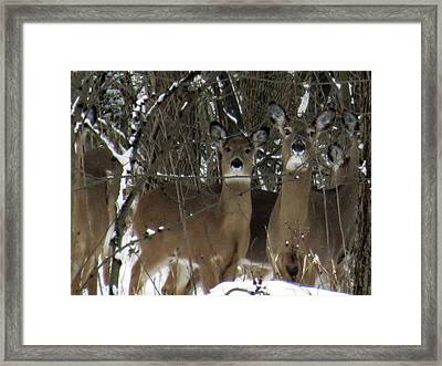 Framed Print featuring the photograph Deer Posing For Picture by Eric Switzer