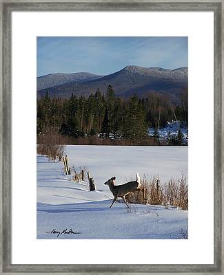 Deer Run Framed Print
