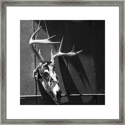 Deer Skull Framed Print by Brooke T Ryan
