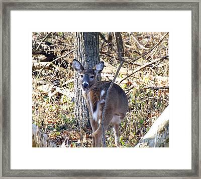Deer Smiles Framed Print by Robyn King