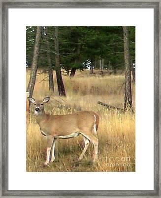 Deer Strikes A Pose Framed Print