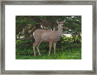 Deer Tourist... Framed Print