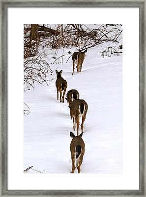 Deer Trail Framed Print by Jay Nodianos
