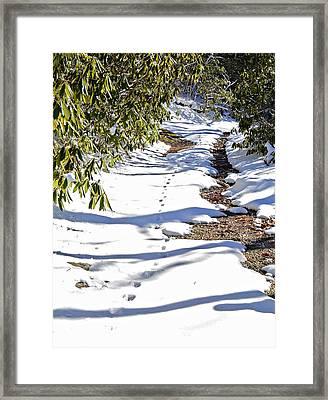 Deer Trail Framed Print by Susan Leggett