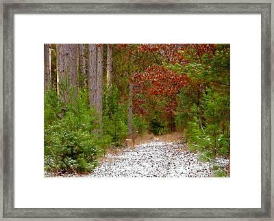 Deer Trail Framed Print