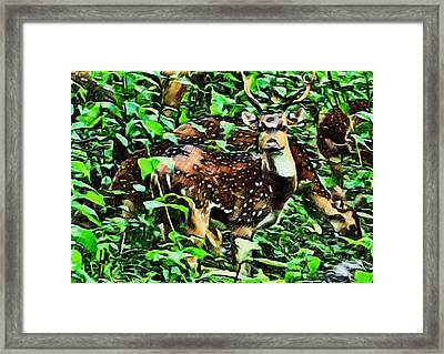 Deer's Green Day Framed Print