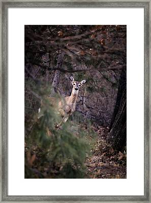 Deer's Stomping Grounds. Framed Print