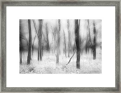 Defenders Of The Forest II Framed Print by Dan Carmichael