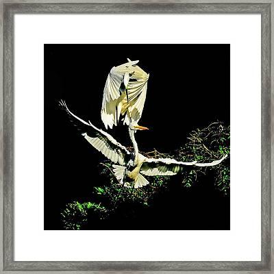Defending The Nest Framed Print by Stuart Harrison