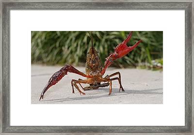 Defiant Crawfish Framed Print