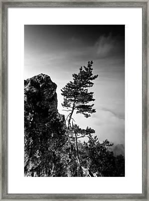 Defiant Framed Print