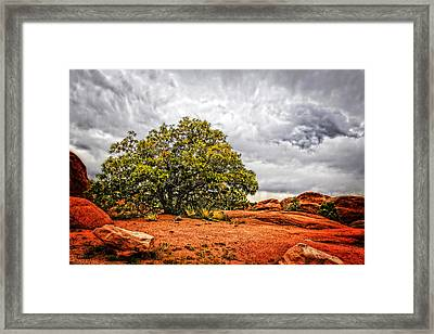 Defying The Storm Framed Print