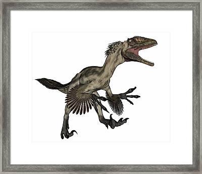 Deinonychus Dinosaur Roaring, Isolated Framed Print