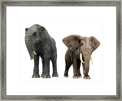 Deinotherium And Elephant Compared Framed Print by Walter Myers
