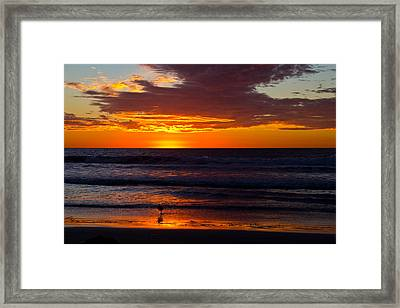 Del Mar Sunset Framed Print by Randy Bayne