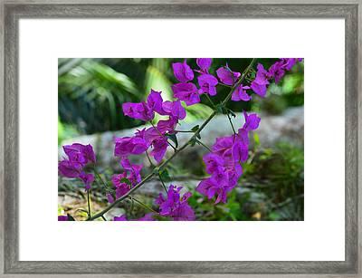Delicadeza Framed Print by Marcos R Fernandes