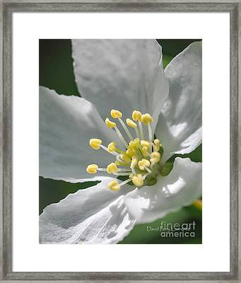 Delcate Widflower With Beautiful Stamen Framed Print