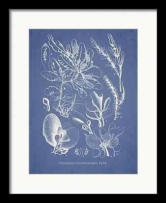 Alga Digital Art Framed Prints