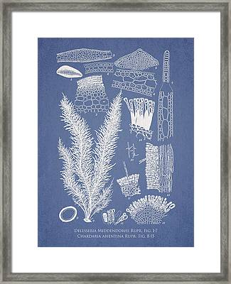 Delesseria Middendorfii And Chardaria Abientina Framed Print by Aged Pixel