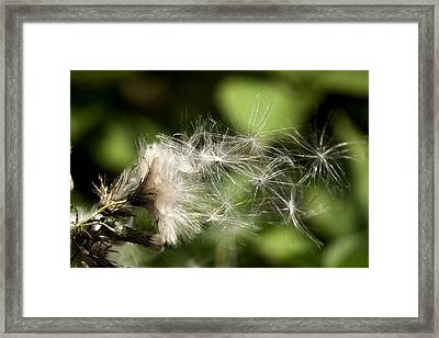 Delicacy  Framed Print by John Holloway