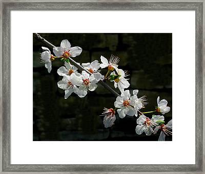 Delicata Framed Print