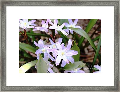 Framed Print featuring the photograph Delicate Beauty by Judy Palkimas