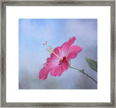 Delicate Beauty Framed Print by Kim Hojnacki