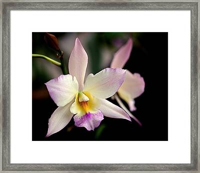 Delicate Beauty Framed Print by Rona Black