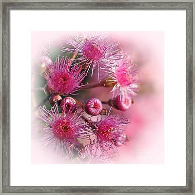 Delicate Buds And Blossoms Framed Print
