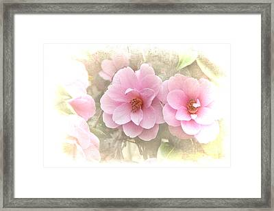 Delicate Camellias Framed Print by Michelle Orai