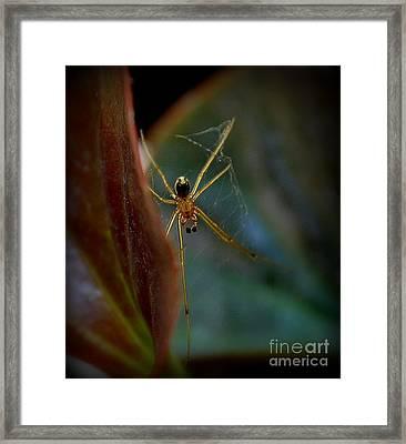 Framed Print featuring the photograph Delicate  Constructor by Marija Djedovic