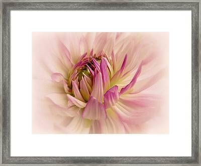 Delicate Dahlia Framed Print by Jessica Jenney